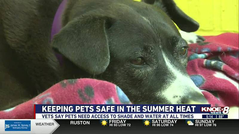 Make sure your pets are cool, hydrated and have access to shade in the brutal heat.