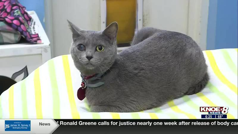 We're meeting Emerald in this week's Adopt a Pet segment! She's a very sweet special needs...