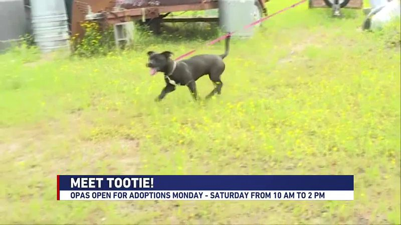 We're meeting Tootie at the Ouachita Parish Animal Shelter in this week's Adopt a Pet segment.