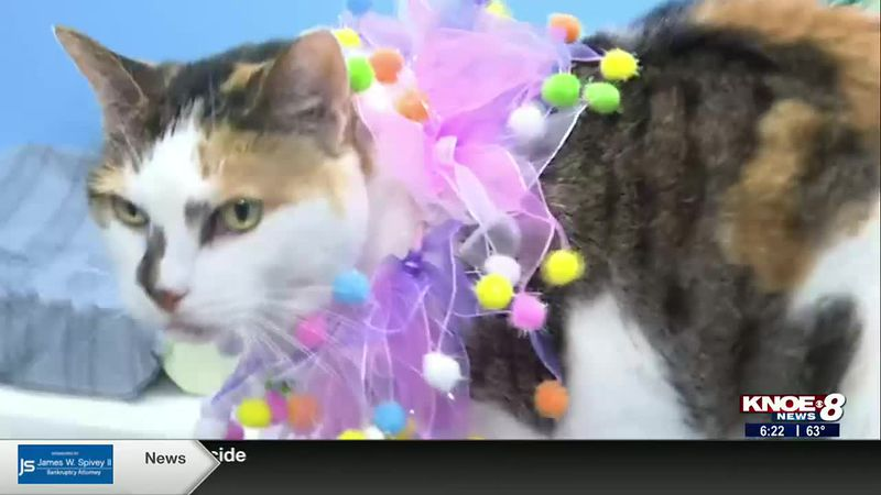 In this week's Adopt a Pet segment, we're meeting Mama, a 10-year-old girl at River Cities...