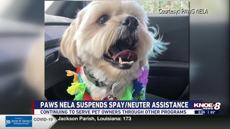 PAWS of Northeast Louisiana is continuing to serve pet owners after having to suspend their...