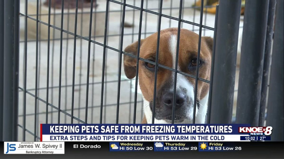 The Humane Society and Adoption Center of Monroe recommend bringing in pets during the cold overnight temperatures. Source: (KNOE)