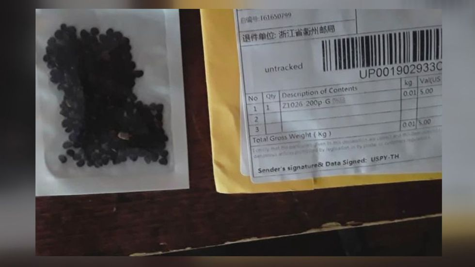 Photo: People across the country have been receiving various types of mysterious seeds in the mail. This photo shows one example received by someone elsewhere in the U.S.