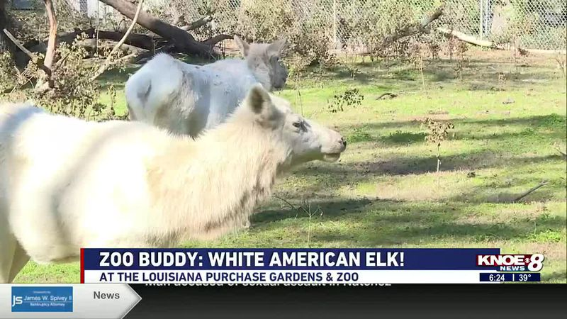We're back at the Louisiana Purchase Gardens & Zoo doing our Zoo Buddy segment with Lisa Taylor...