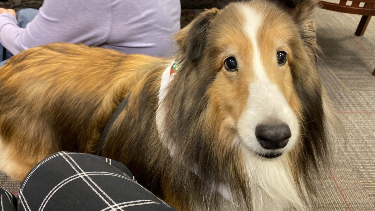 Dogs like Jake stopped by the ULM Library to support students during final exams. Source: (KNOE)