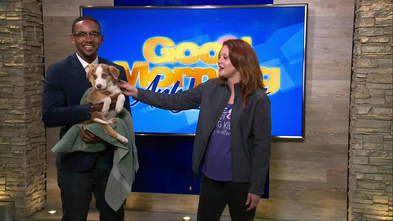 In this week's Adopt a Pet segment, Roxanne Smith joined us in the studio with an adorable...
