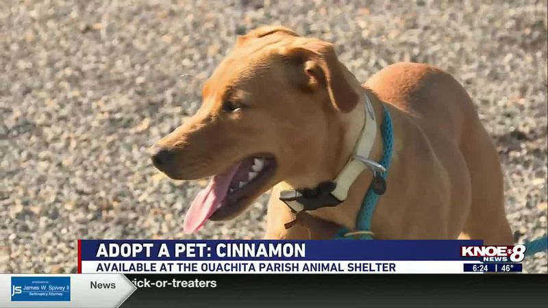 In our Adopt a Pet segment this week, we're highlighting Cinnamon who was found as a stray and...