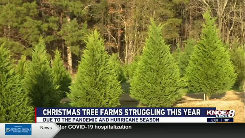 With holiday season in full swing, many people are looking for that perfect Christmas tree....
