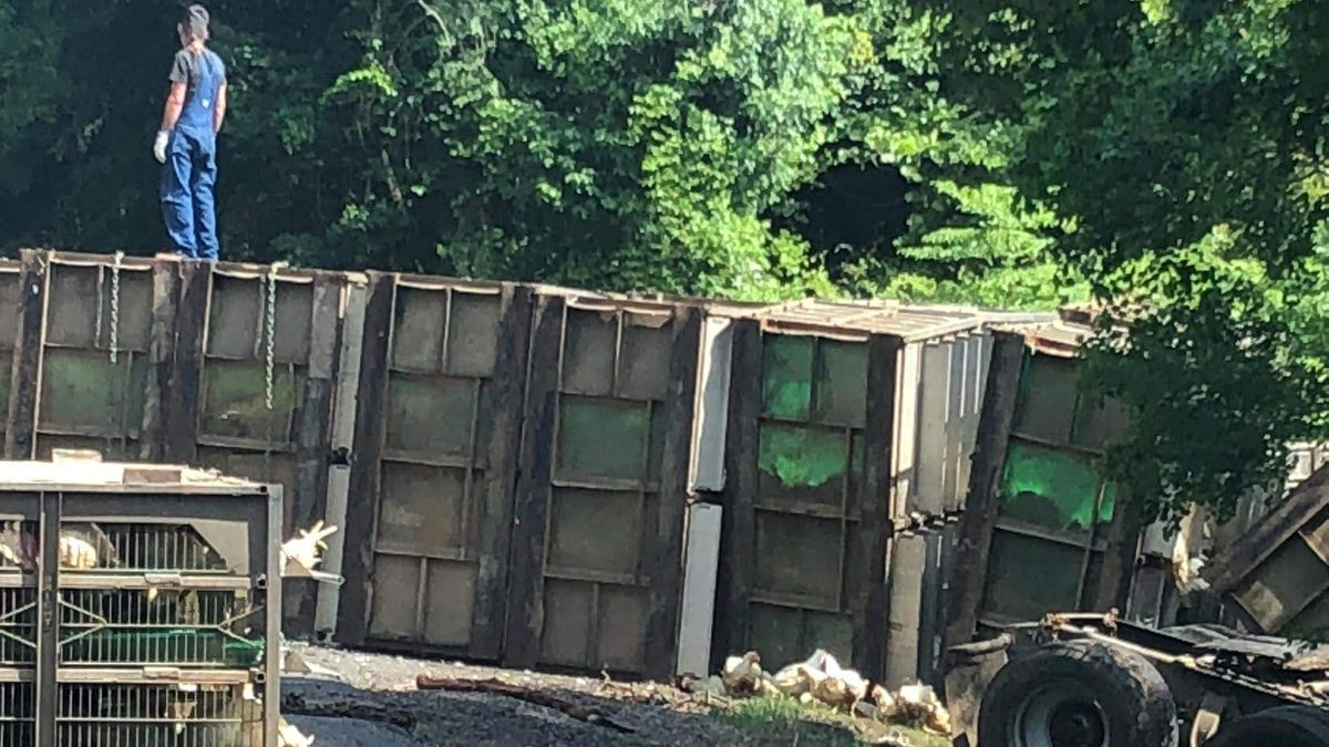 A truck carrying live chickens crashed in Union Parish. (6/13/18) | Photo: KNOE