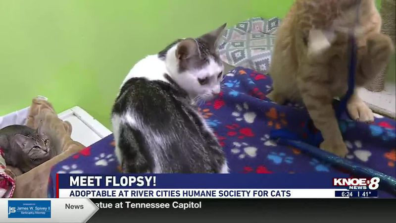 We're meeting Flopsy in our Adopt a Pet segment at River Cities Humane Society for Cats this...