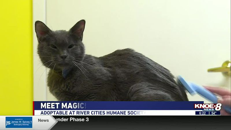 In our Adopt a Pet segment this week, we're highlighting Magic at River Cities Humane Society...