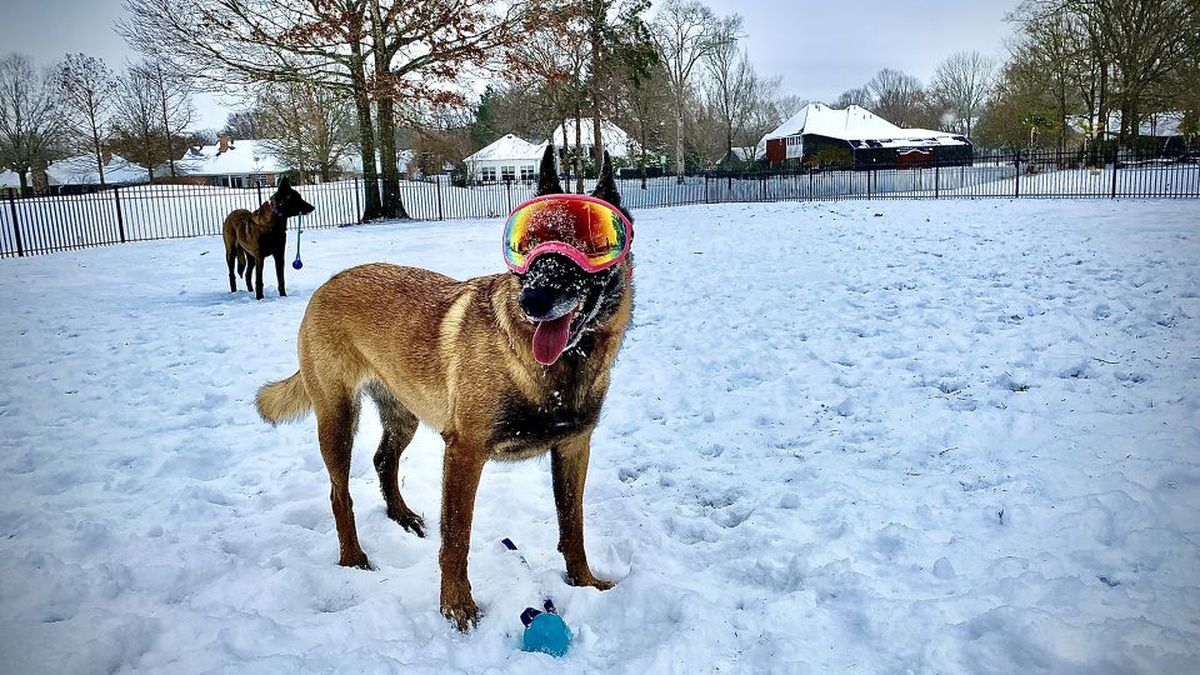 Viewer Photo: A dog enjoying the snow.