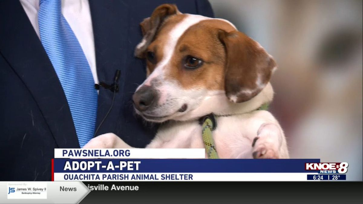 Dotty from the Ouachita Parish Animal Shelter. <br />Source: (KNOE)