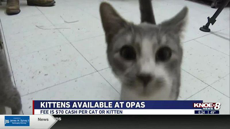 Adopt a Pet: Kittens