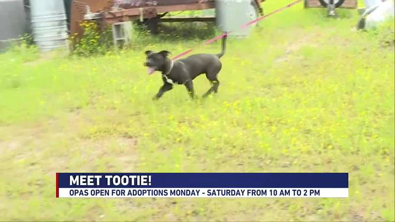 We're meeting Tootie at the Ouachita Parish Animal Shelter in this week's Adopt a Pet segment.