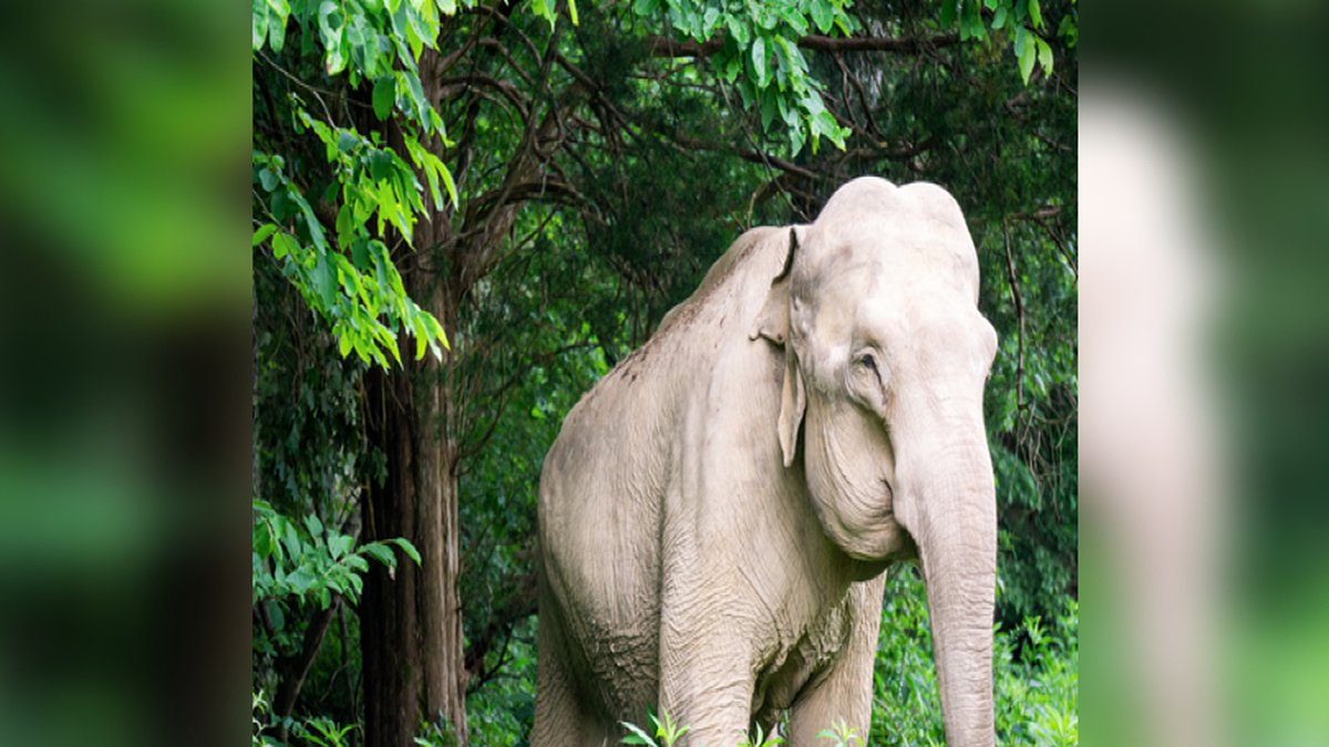 Shirley the elephant passes away