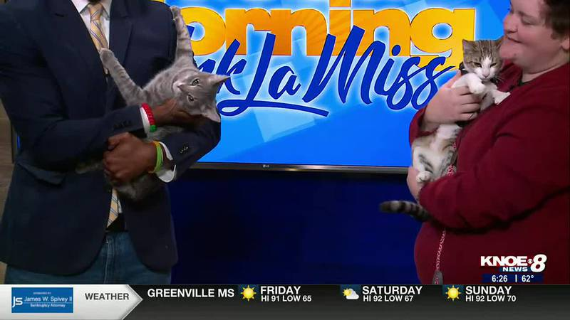 Meet Gary and Graffiti! They're available for adoption at River Cities Humane Society for Cats.
